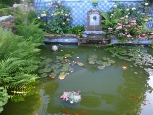1 Le bassin avec des poissons et un lotus/ the pond with fish and lotus