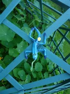 22 Lézard bleu aux rayures et capucines / striped blue lizard