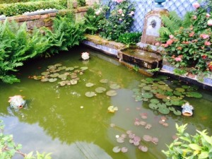 2 Le bassin avec poissons et lotus/ Pond with fish and lotus