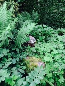 6 L' hérisson dans les fougères / The hedgehog in the ferns