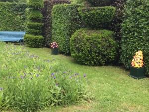 Dans le Jardin régulier 3 grands récipients aux fleurs carnivores... i